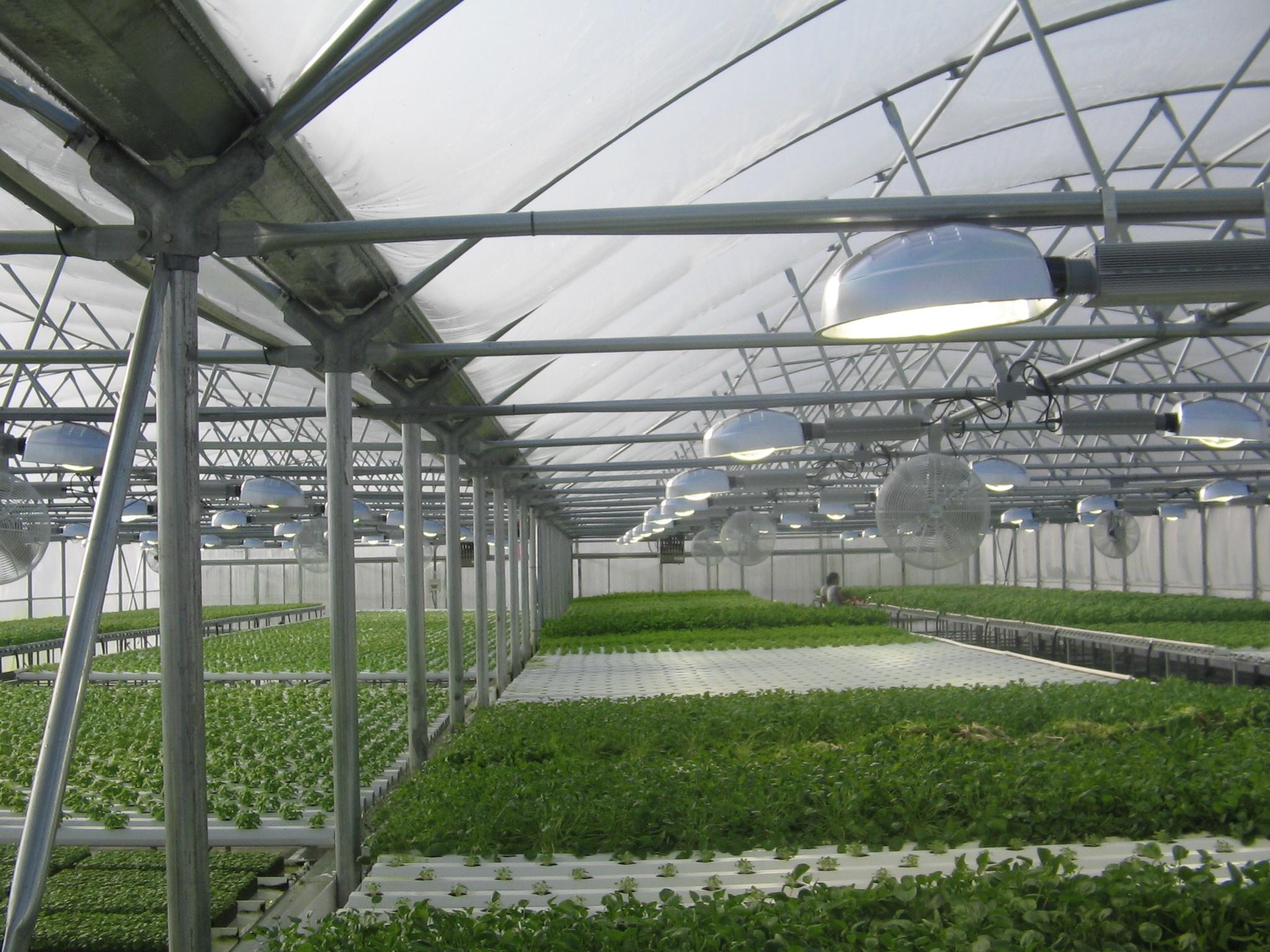 Commercial_Vegetable_Greehouse.jpg